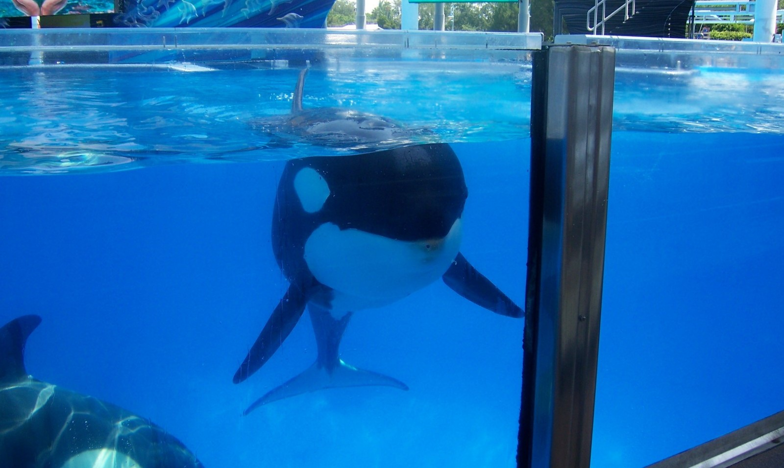 traumatic experiences orcas know all too well