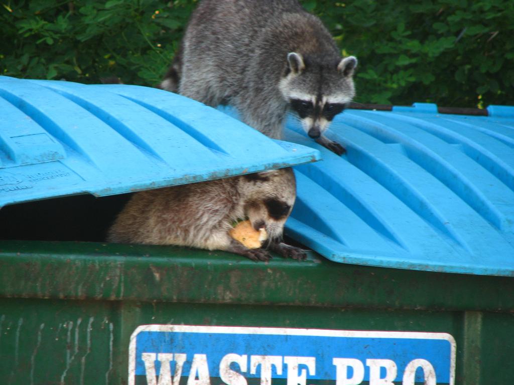 5 Ways Plastic Pollution Impacts Animals On Land