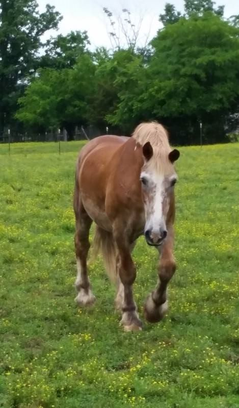 3 Horses That Were Saved From Slaughter Thanks to Kind People