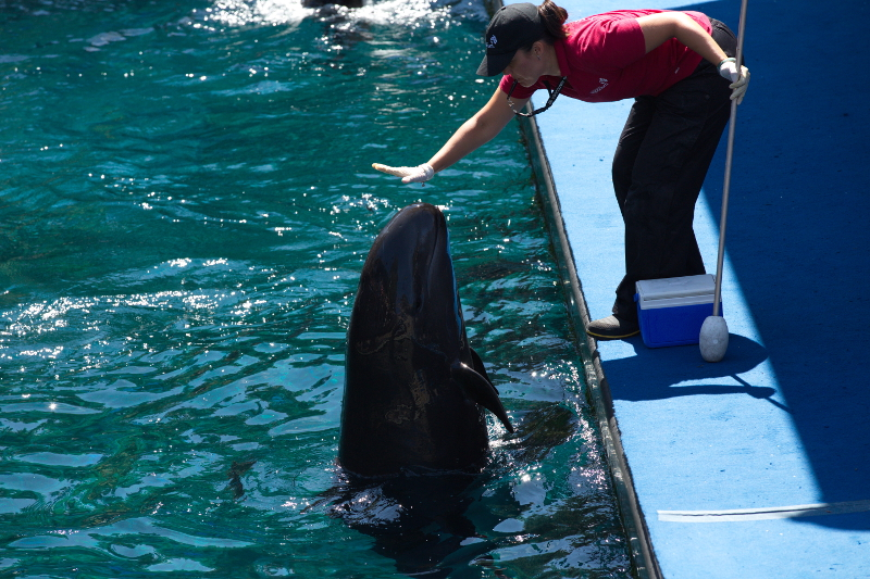 Vancouver Aquarium Uses Rescued Cetaceans to Justify Captivity