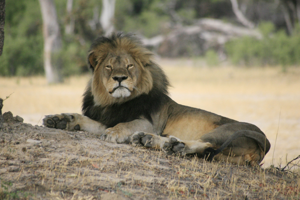 Time for Major Airlines to Stop Shipping Africa Big Five Trophies