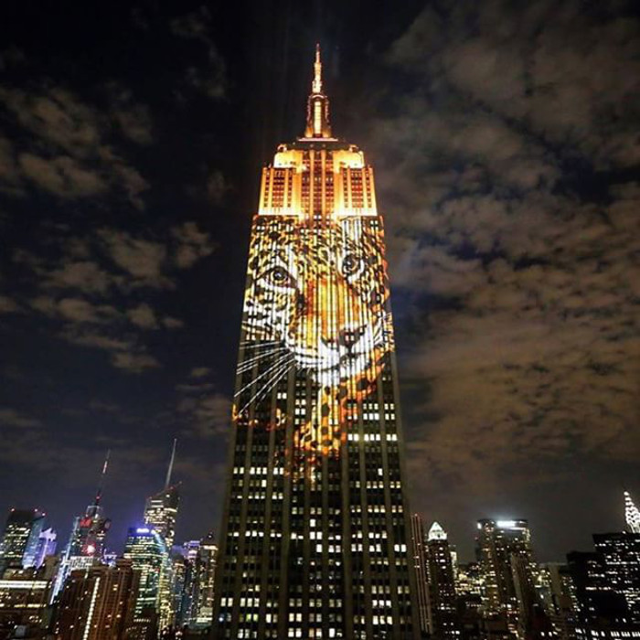 After Epic Empire State Building Display, How Can YOU Help in the Race Against Extinction?