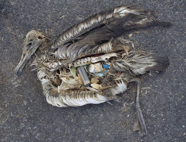 The-Plastic-Impact-on-Birds