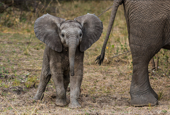 What We've Learned From Elephants After Years of Documenting Them in the Wild
