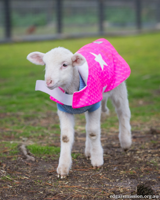 Rescued Lamb's Subtle Smile Will Inspire You to Share Compassion for Animals
