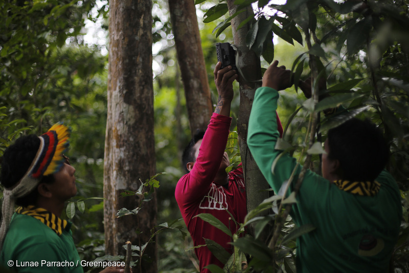 How an Amazon Indigenous Community Is Using Technology to Fight Illegal Logging