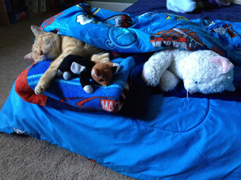 Little Boy Tucks in His Rescued Cat Every Day so He Knows He Has a Forever Home (PHOTOS)