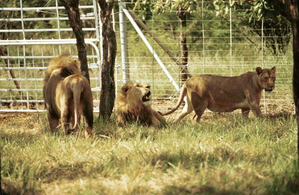 lionsonreserve