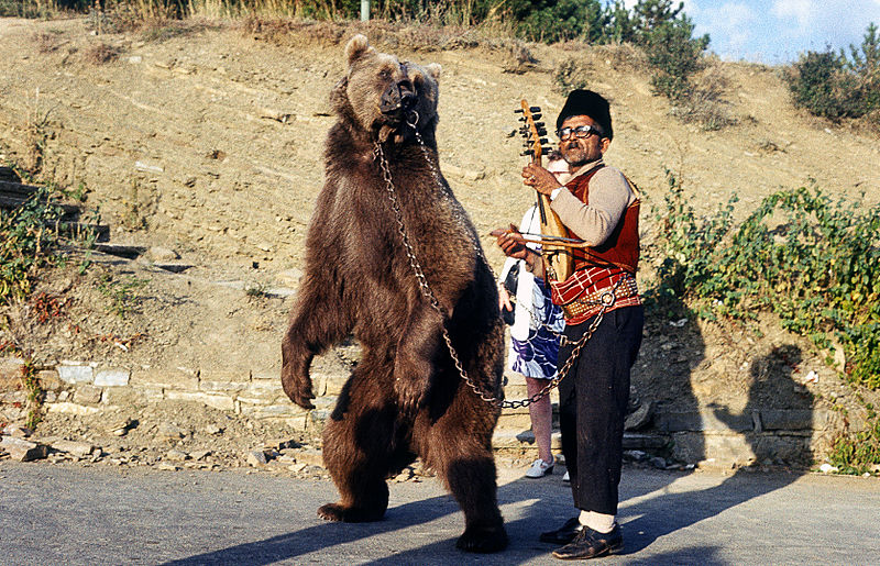 800px-Dancing_bear_in_Bulgaria_about_1970_1