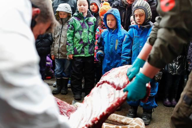Giraffe butchered with kids watching