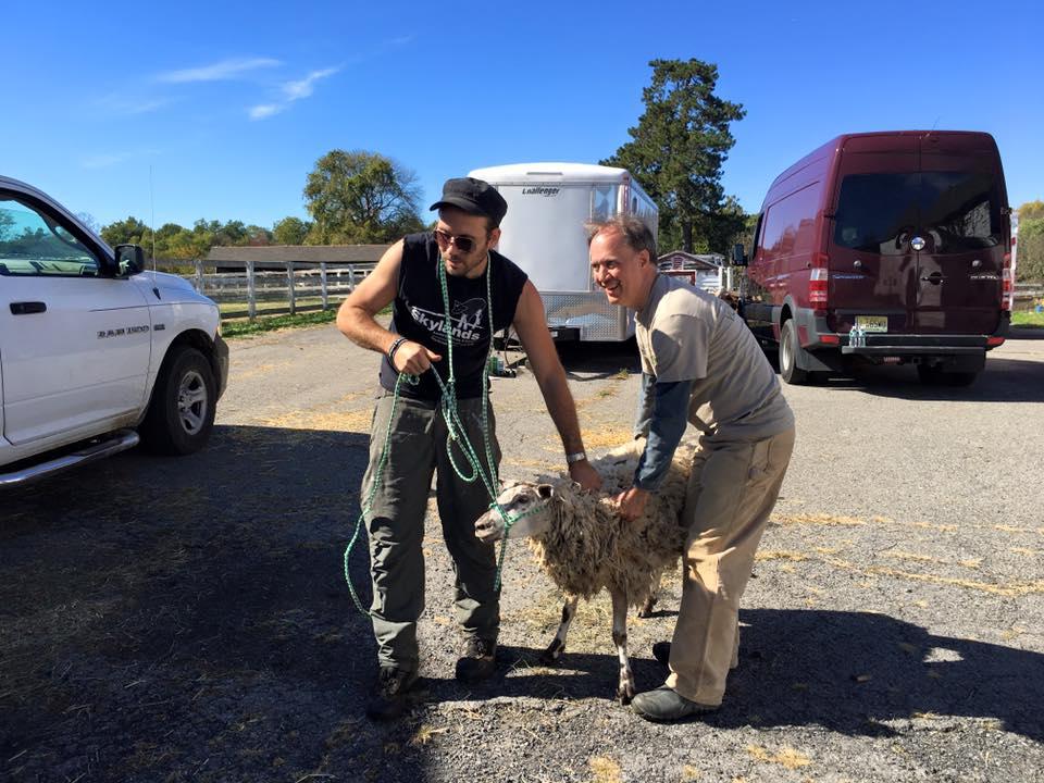 farm animal rescue
