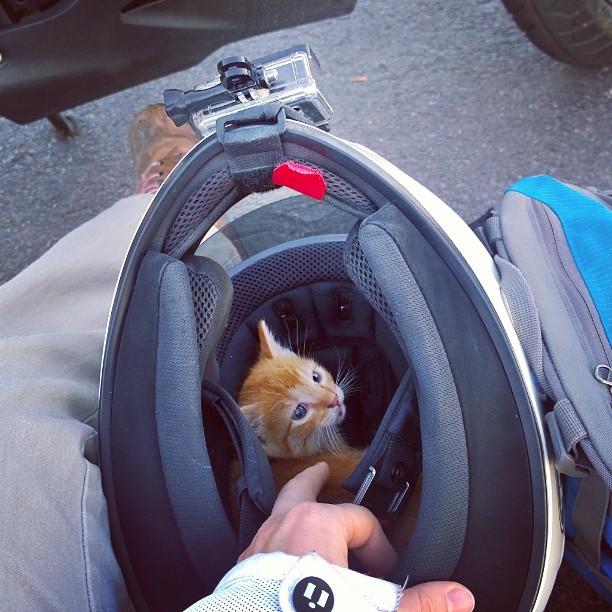 kitten in traffic 2