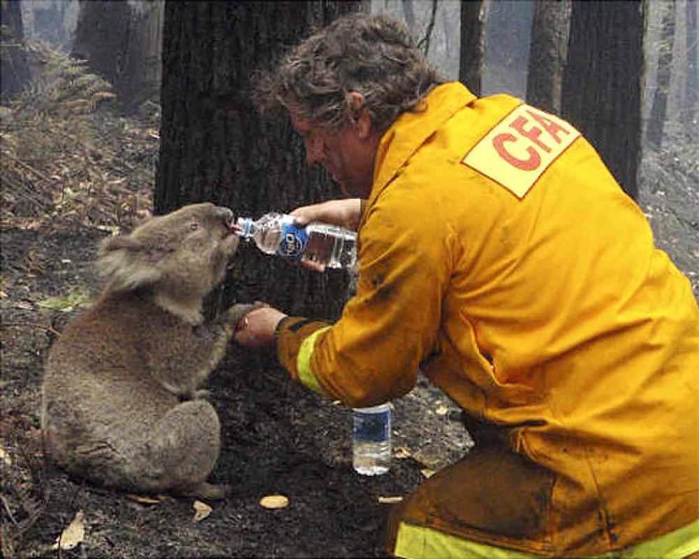 1000-climate-1-bushfires