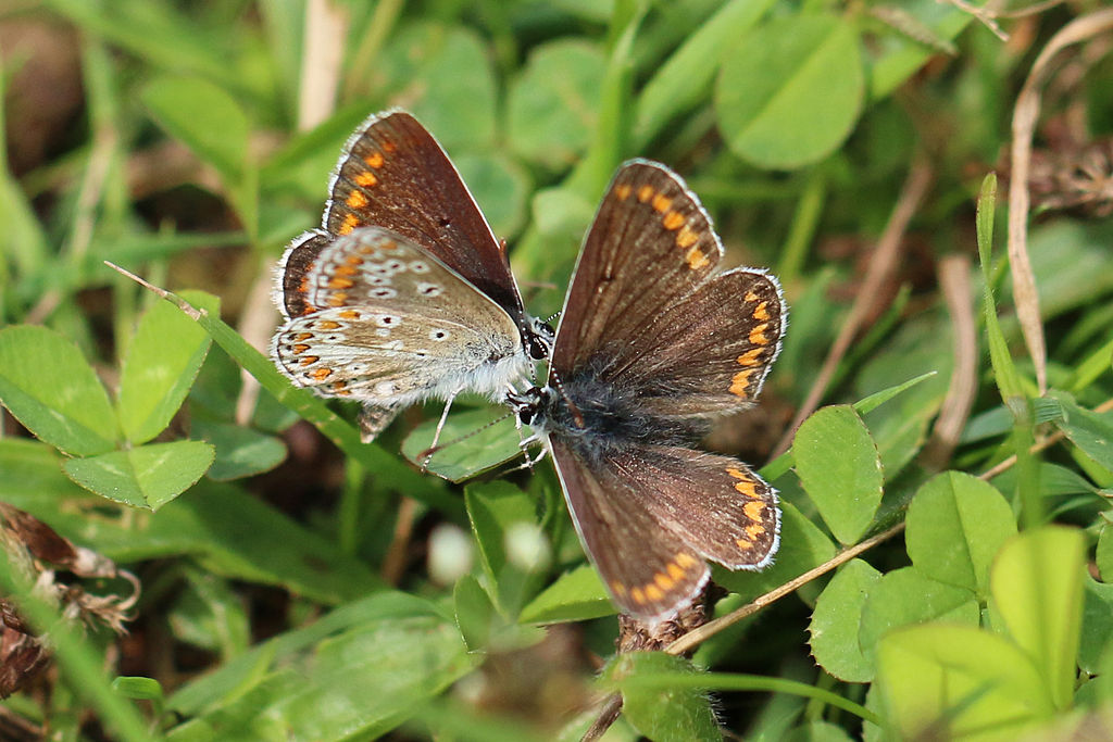 How Climate Warming Impacts Butterflies
