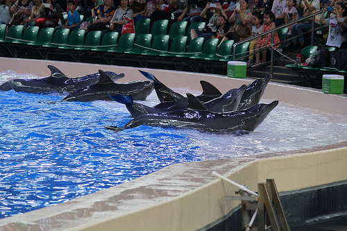 Marine park dolphins