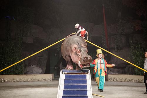 Circus Hippo