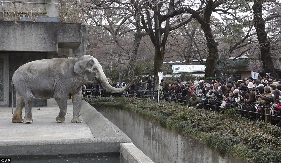 Could this Be the Saddest and Loneliest Elephant in the World?