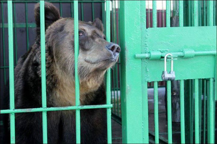 Animals That Nearly Drowned in Zoo Flood Still in Captivity, Just in New Cages
