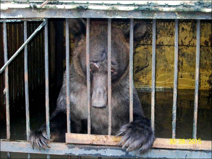 Animals That Risked Drowning in Zoo Flood Still in Captivity, Just in New Cages