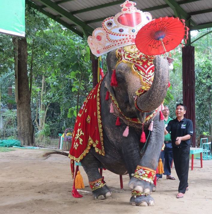 Help Free the Performing Elephant Who's Been in a Zoo For 55 Years and Make Her Birthday Wish Come True!