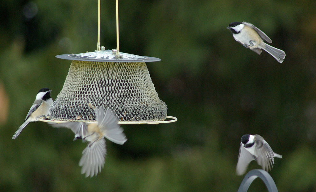 Can a Bird Feeder in Your Backyard This Winter Benefit You and the Birds?