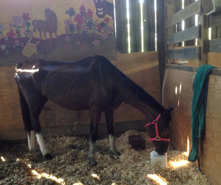 The Beautiful Story of How a Caring Little Girl Helped Save a Sick Horse Through the Power of Love