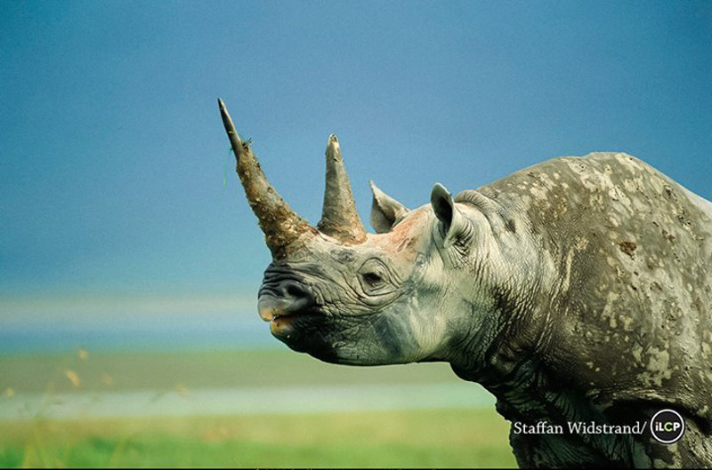 Here is the One Difference Between Your Nails and This Animal That is Leading to Extinction