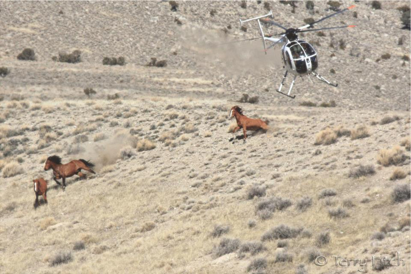 What This Heartbreaking Picture of Wild Horses Running for Their Lives Has to Do With Your Burger