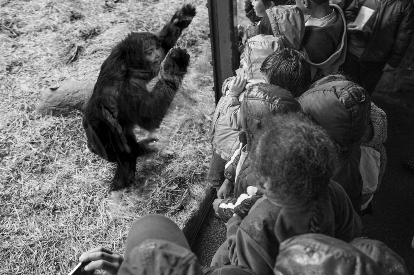 Photographer's Animal Photos Will Make You Think Completely Differently About Zoos