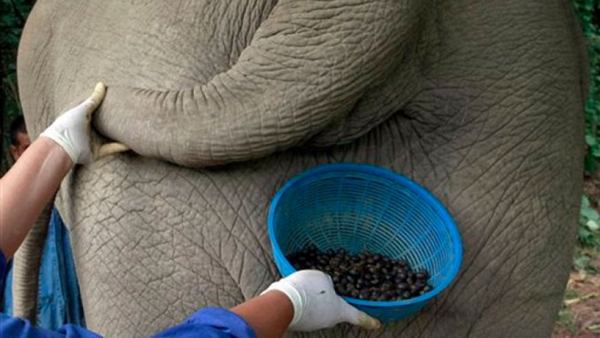 elephant_dung_coffee