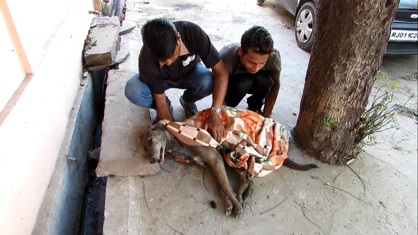 jagdish-nandu-rescue