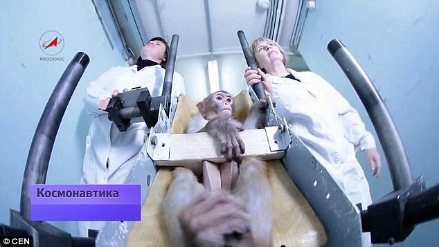 russia monkey1