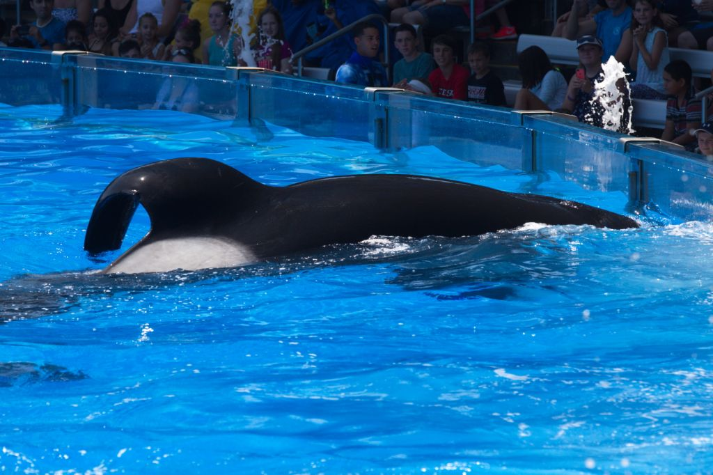20150706-USA-INV-D1-001-TILIKUM (c) 2015 Orca Research Trust