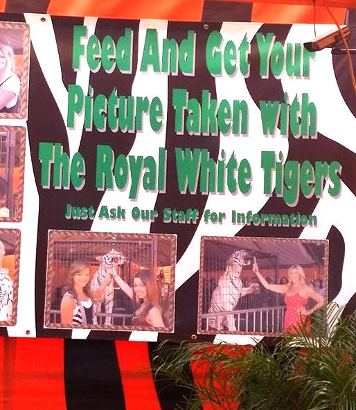 royal-white-tiger-sign-1