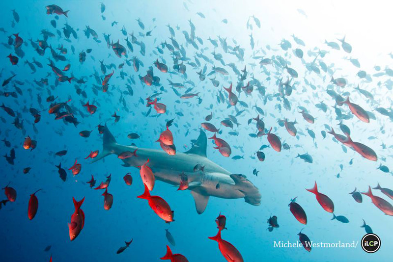 100 Million Sharks are Killed Every Year … Here's Why This is Such a Serious Problem