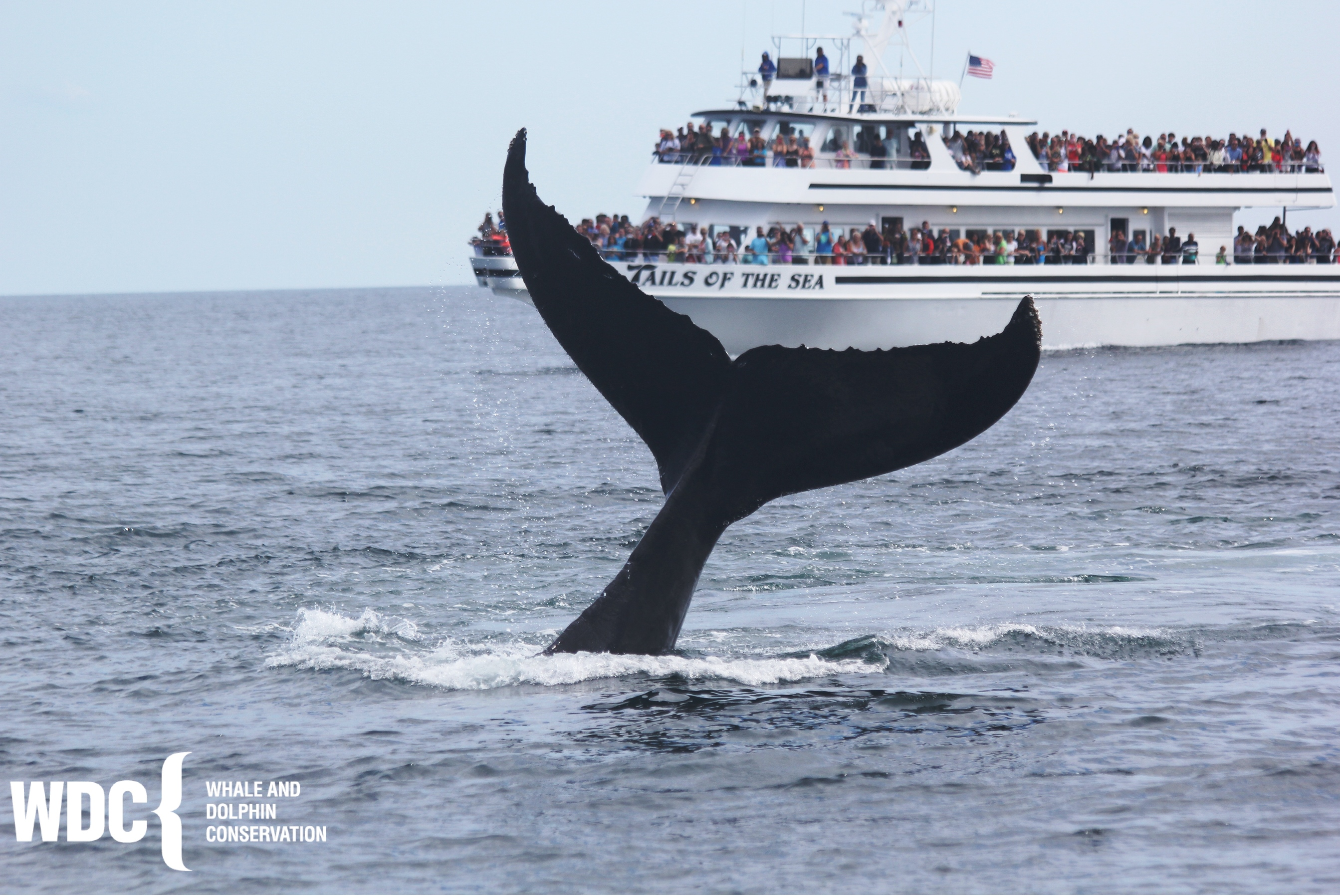 Capt John Whale Watching observing whale