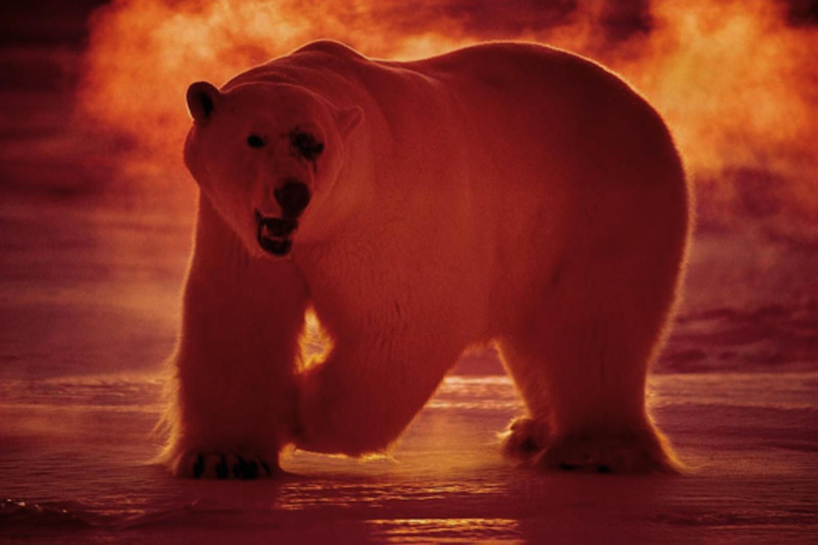 Instagram Polar Bear