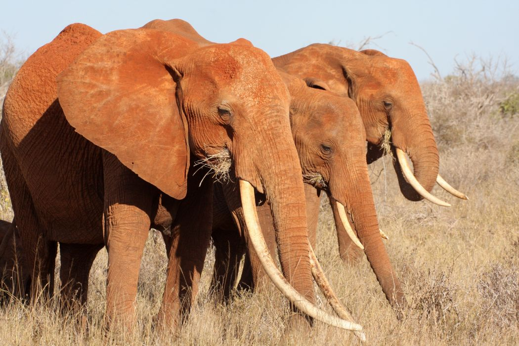 wild_elephants_tripadvisor