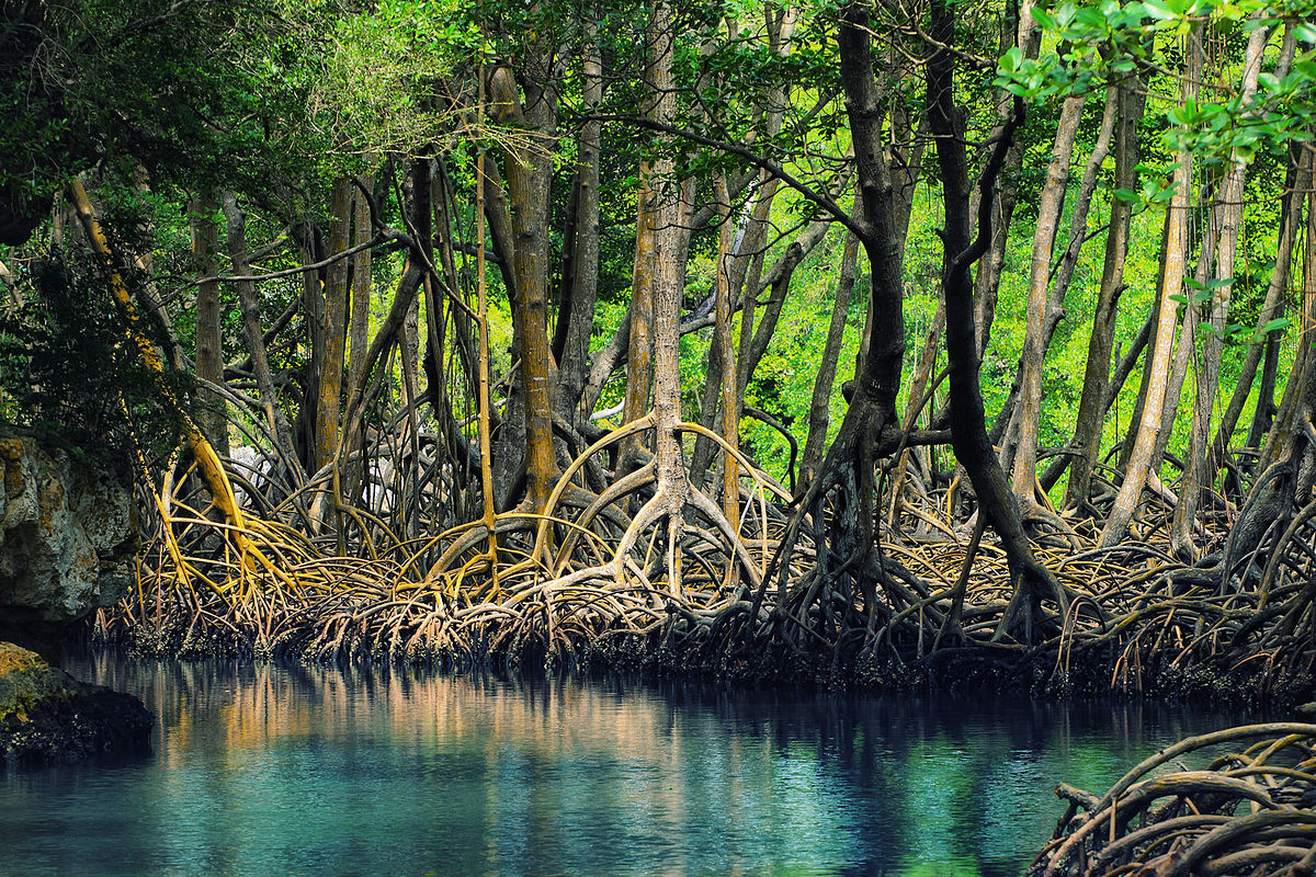 1200px-Dominican_republic_Los_Haitises_mangroves