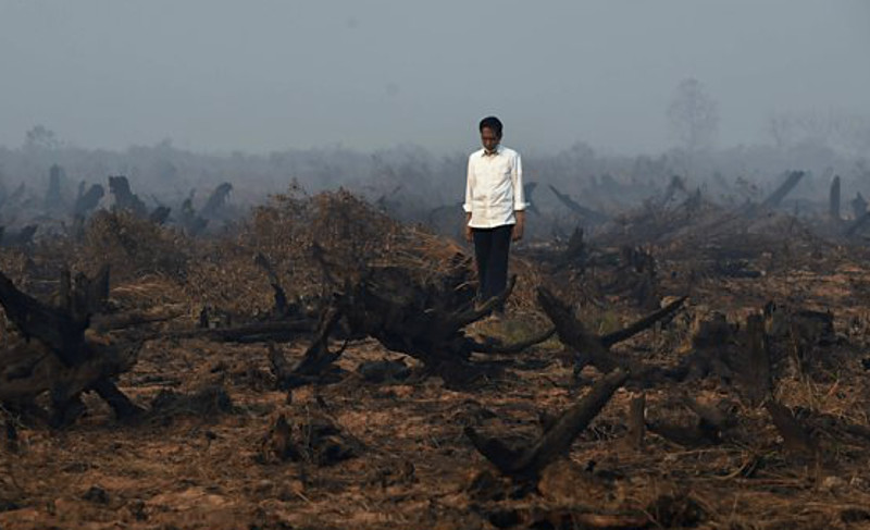 President of Indonesia Stands on the Wreckage of His Country, Burnt for the Sake of Palm Oil