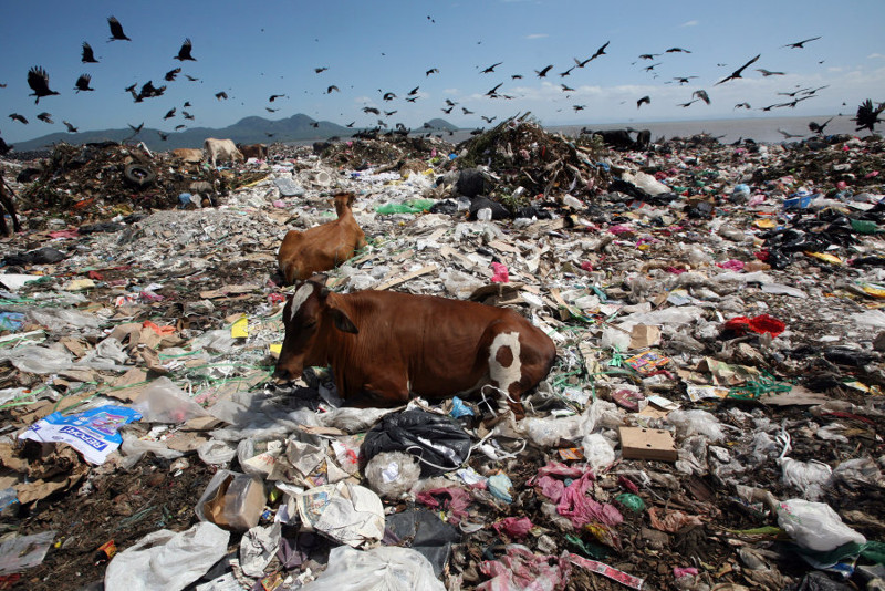 This Sad Image Reveals the Extent of Our Trash Problem … and the Animals Who Will be Affected