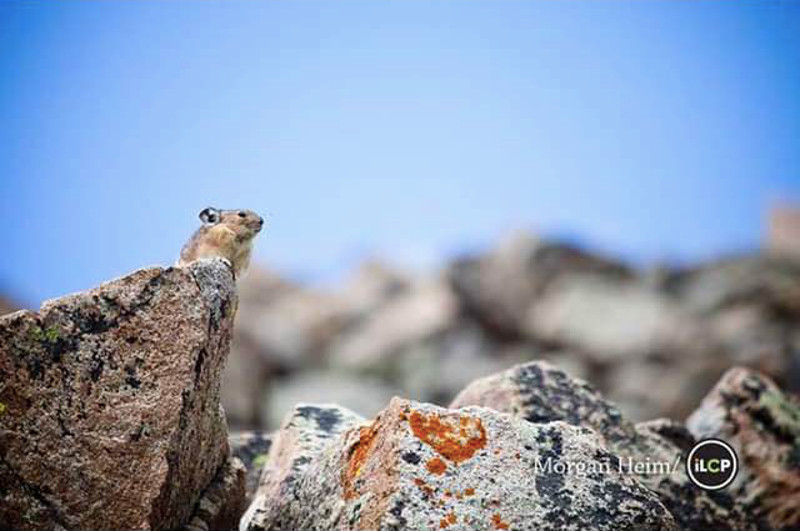 This Little Animal is Staring Across a Ravine…into the Face of Extinction