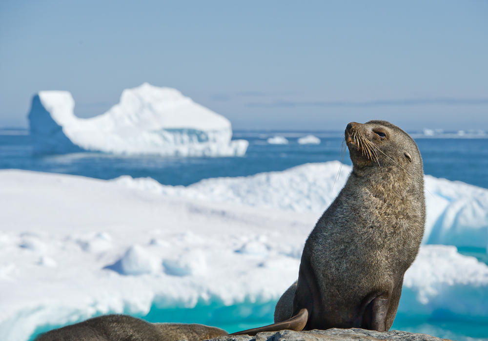 Is Your Krill Oil Supplement Risking the Antarctic Wildlife?