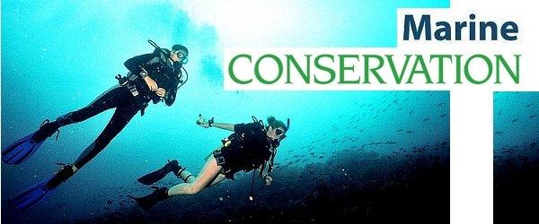 marine conservation volunteer vacation biology
