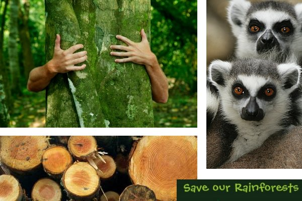 save our rainforest volunteer