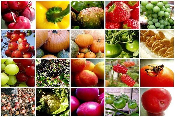 Vegan vitamins and supplements for optimal health