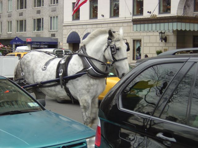 ban horse carriages animal cruelty