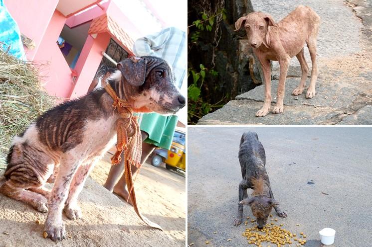 Karma Dog Project India