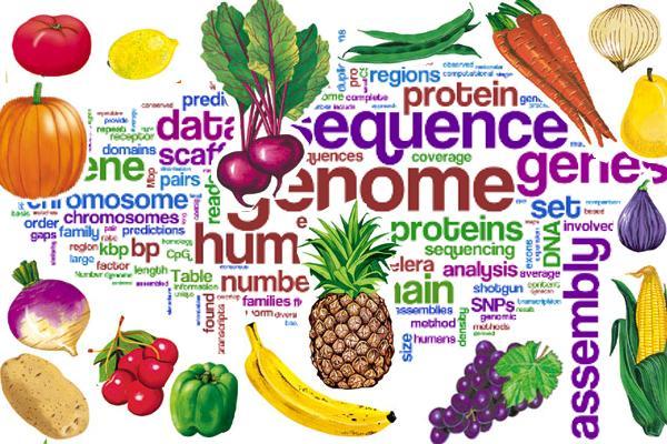Vegan Diet Science nutrition health