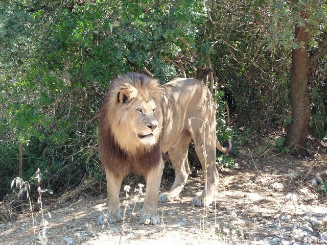 lions killed wild animals ohio